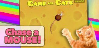 Gra dla kota