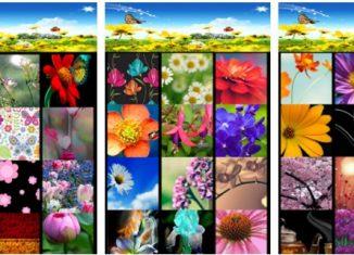 Kwiaty Tapety
